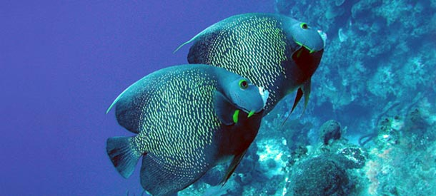Scuba Diving and Snorkeling in the Bahamas