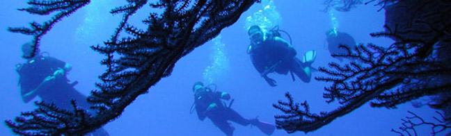 Provo Dive and Snorkeling Programs & Schedules