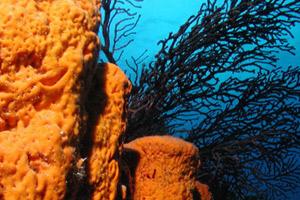 Turks & Caicos Group Scuba Diving Charters