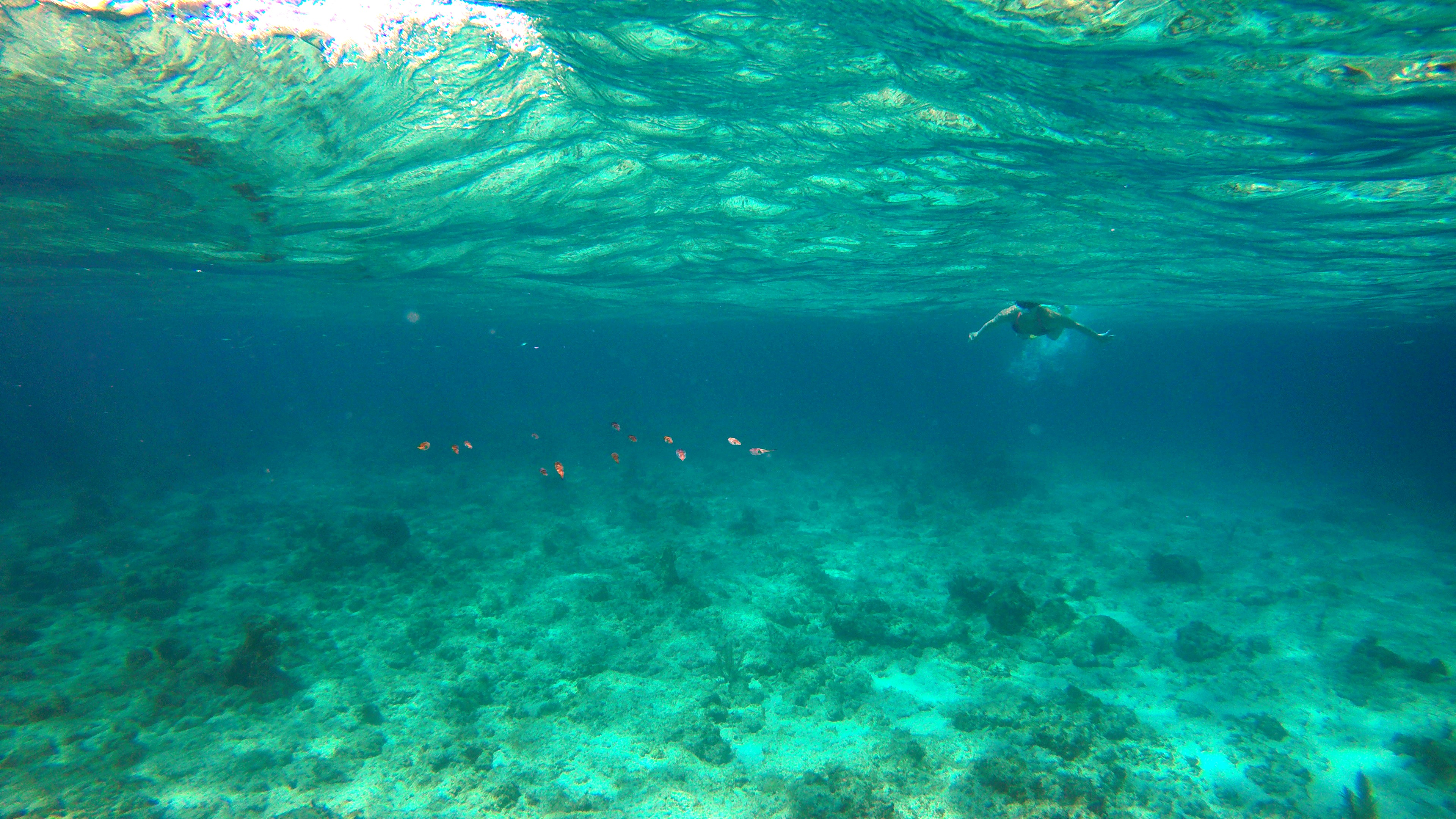 Snorkeling in the TCI with Caicos Adventures